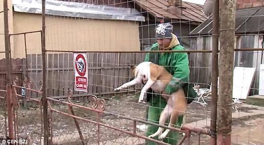 袭击人的其中一条恶犬