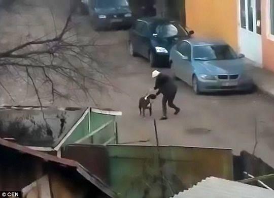 男子勇斗恶犬