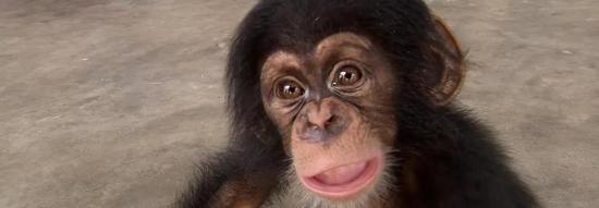 ▲小黑猩猩照