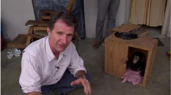 ▲获救的小黑猩猩 图据BBC