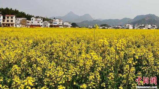 """资料图:""""中国最美乡村""""江西婺源油菜花海。戴向阳 摄"""
