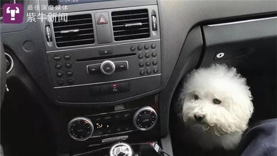 [在宋楠帮助下找到主人的小狗]