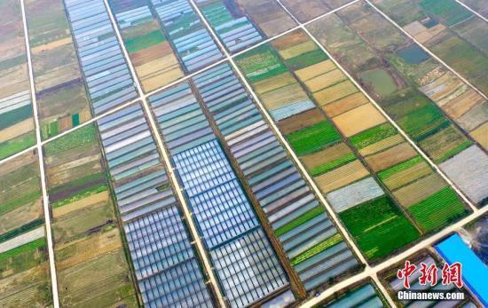 资料图:江西省新余市渝水区界水乡联盟有机蔬菜种植园春意盎然,这里是一个有机蔬菜特色小镇。 赵春亮 摄