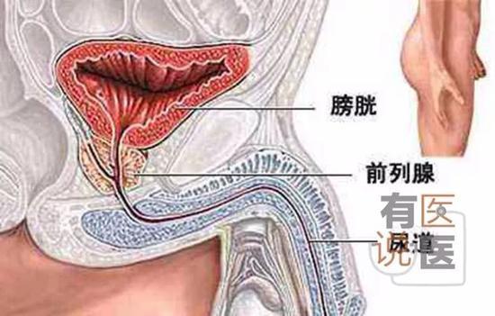 成年男子正常尿道最窄处只有几毫米