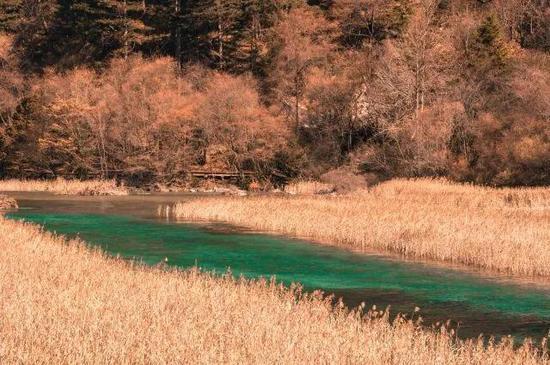 ▲芦苇海海拔2140米,全长2.2公里,是一个半沼泽湖泊。(图自新华社)