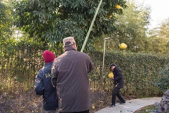 昨天下午,房东朱大伯和叶大伯、赵大伯一起,在院子里打香泡。