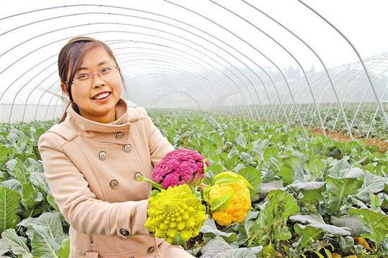 女村支书为带动村民建蔬菜大棚 把婚礼办在大棚内