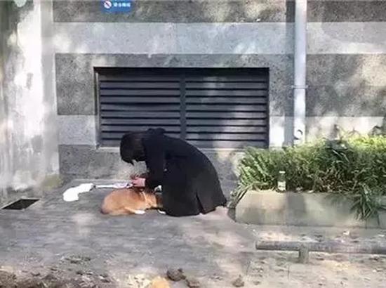 """女孩旦旦在何兴丽家楼下发现了自己的柯基狗。 本文图片均来自""""深一度""""(除署名外)"""