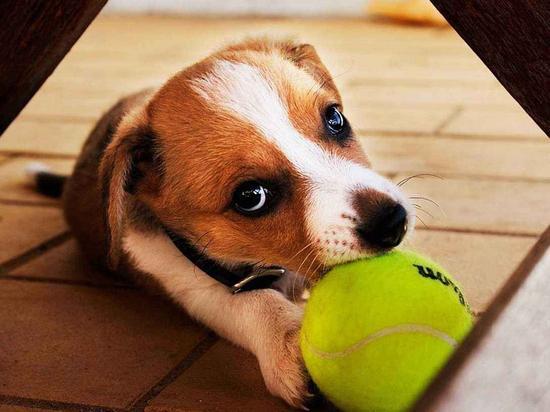 狂犬病致死率近100% 被猫狗咬了一定要这么做