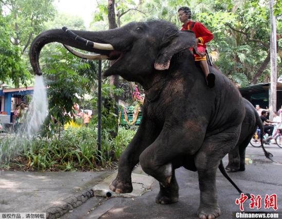 资料图:泰国曼谷,动物园中的大象。