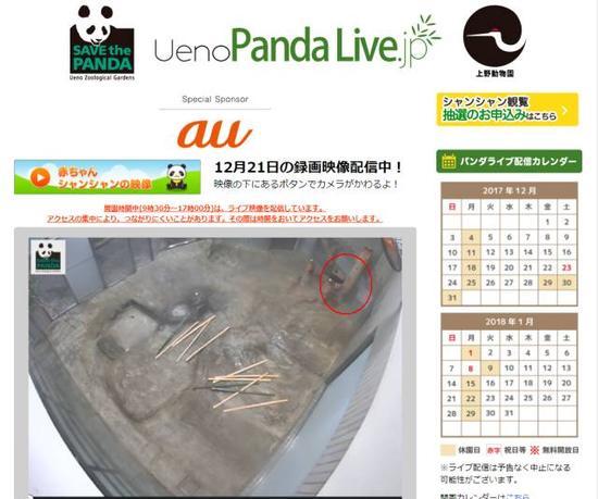▲12月21日下午4时,通过上野动物园的直播窗口看到的香香(红圈中)