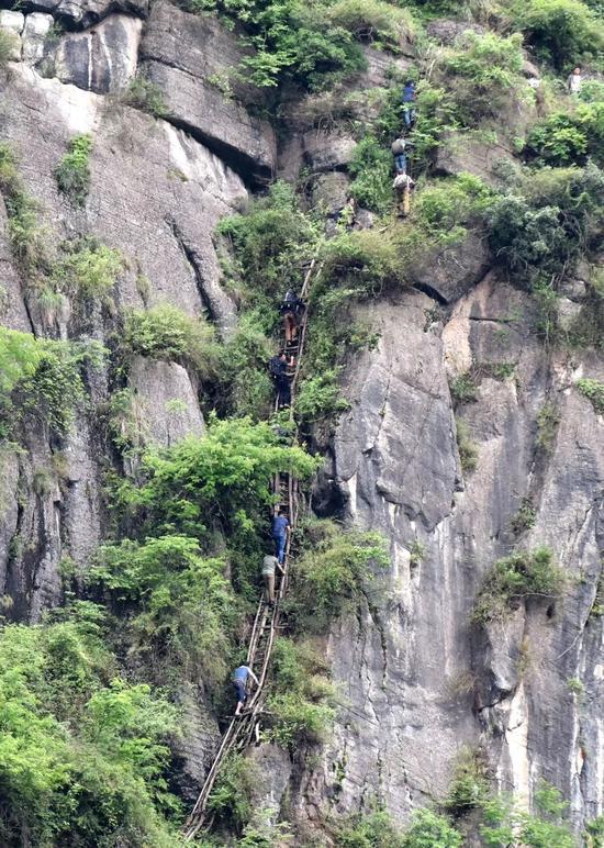 老藤梯 上山的人只能在悬崖上匍匐前行