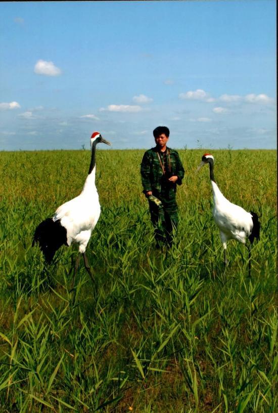 这是徐秀娟的弟弟徐建峰在扎龙自然保护区工作的场景(资料照片)。新华社发