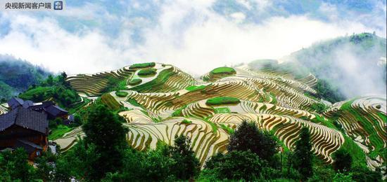 广西龙胜龙脊梯田(图片来源:龙胜县农业局)