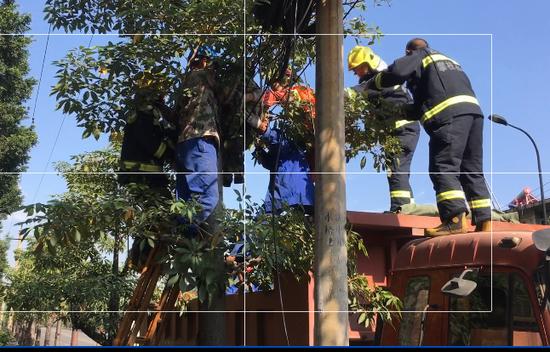 四川攀枝花一位工人正在树上施工时,失慎蒙受电击,救火员对其停止施救。消防供图