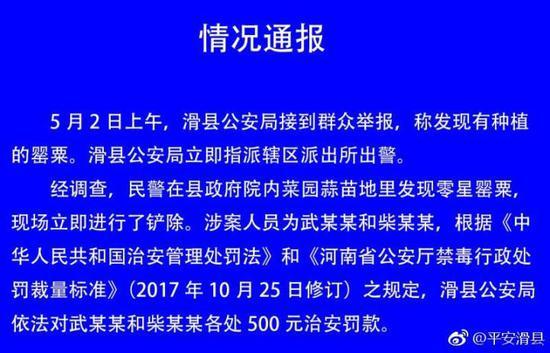 河南滑县政府院内现多株罂粟花 官方:临时工误种