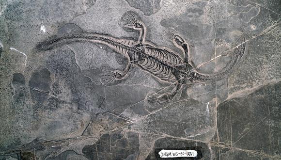 复盘2.3亿年前的地球世界