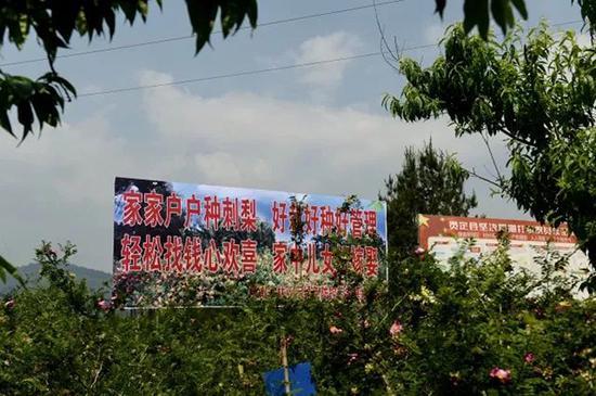 贵定县沿山镇刺梨种植标准化基地
