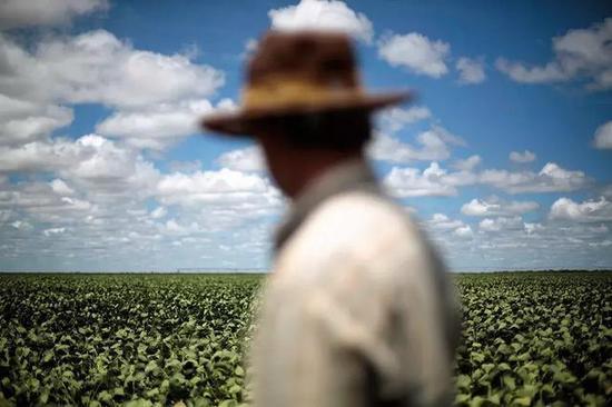 """(美国大豆协会主席指出,农作物价格在过去五年下降40%,导致农场收入下降50%,""""来自中国的需求是大豆价格的支柱,如果需求降低导致价格下滑,很多农场将入不敷出,甚至无法继续耕种""""。图/Reuters)"""