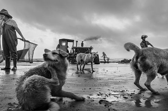 海边的狗和渔民