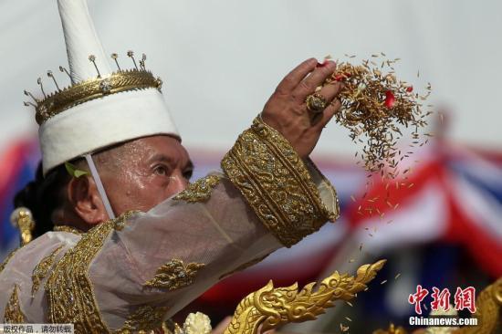 当地时间2018年5月14日,泰国曼谷,泰国传统春耕节在皇家田广场开幕,泰国农民在现场播撒稻种,寓意好运与丰收。