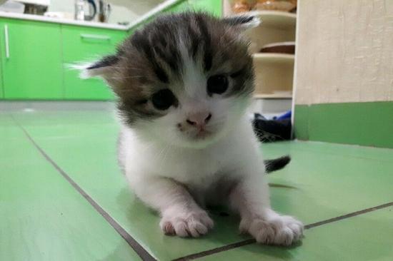 待售的小猫
