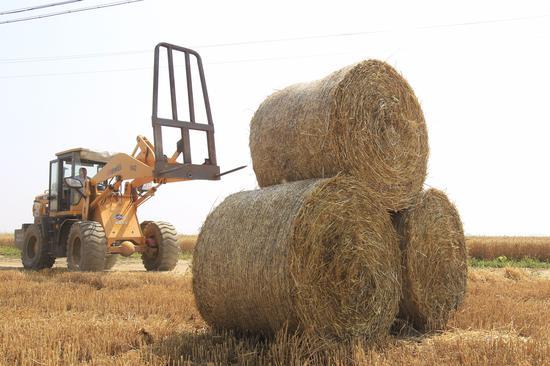 麦秸打成卷送电厂再利用 农民增收8000万(图)