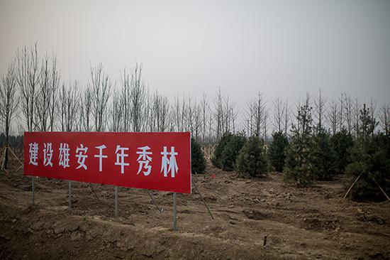 雄安新区将再植树10万亩 目前森林覆盖率11%