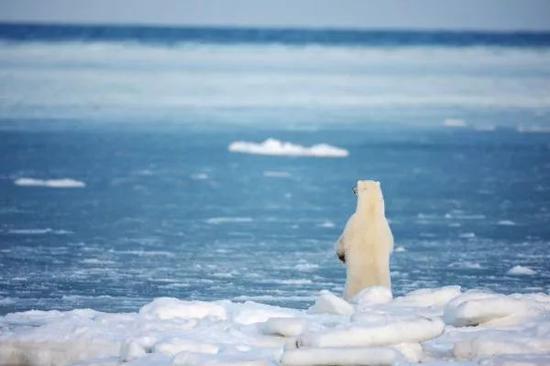 ▲北冰洋(視覺中國)