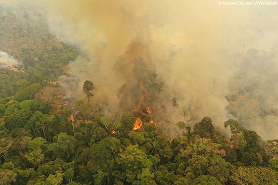 2019年8月,巴西西北部的波多韦柳(Porto Velho),亚马逊雨林火灾现场。 微博 <p><a href=