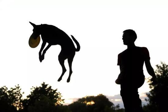 在薩莫拉市,登記在冊的狗狗數量甚至超過了當地兒童。圖據路透社