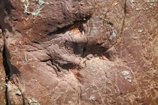 三比羅嘎東岸巖壁上三腳趾恐龍足跡單個拍照。