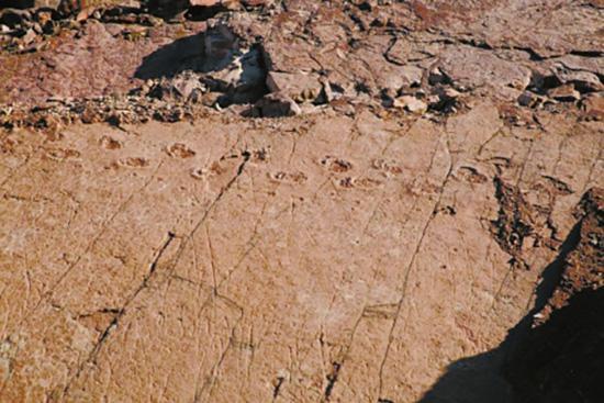 三比羅嘎東岸腳下蜥腳類恐龍行進足跡。