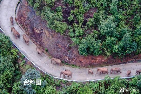 大象回家了!云南北移亚洲象群平安回归栖息地
