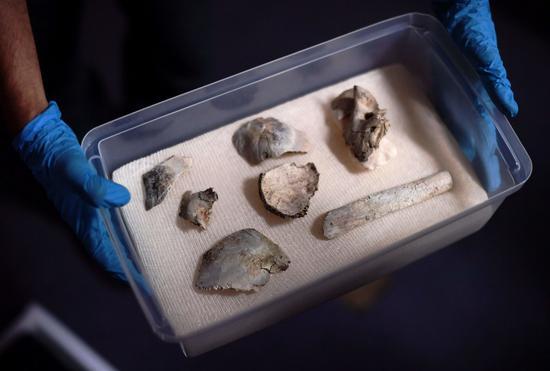 """""""露西亚""""化石碎片 图自纽约时报"""