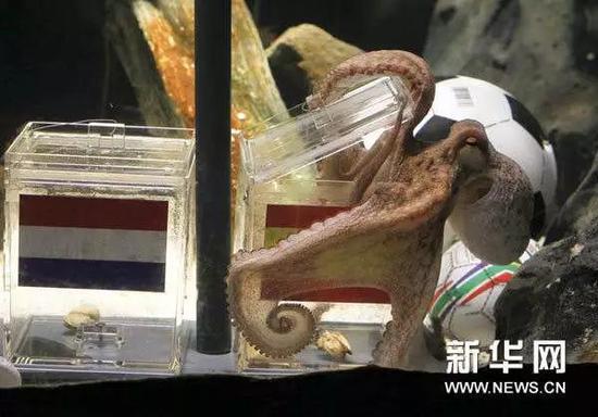 """▲堪称世界杯最佳""""预言帝""""的章鱼保罗"""