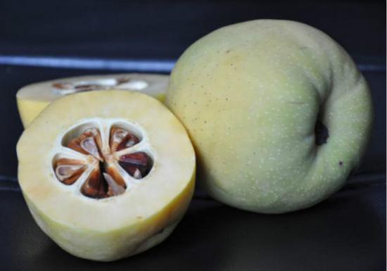 《诗经》中的木瓜