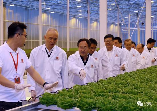 察看极星农业科技园生菜种植