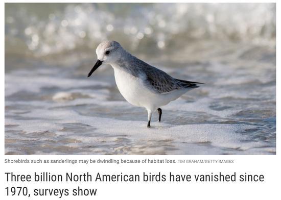 研究:半个世纪以来 美国加拿大的鸟少了30亿只