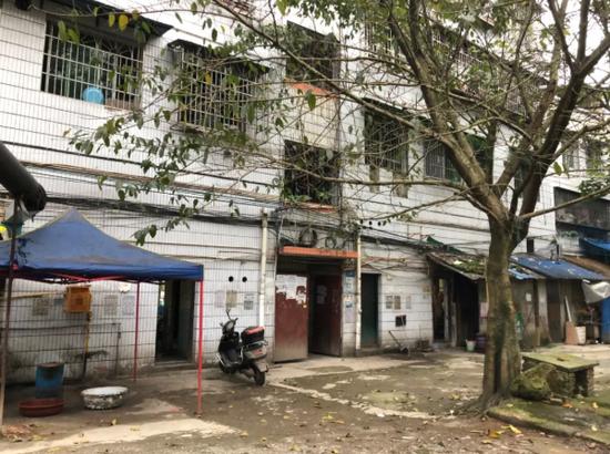 2014年至2018年间,尹光德等人在龙水镇望河楼背后的黄桷树下开设赌场。新京报记者向凯 摄