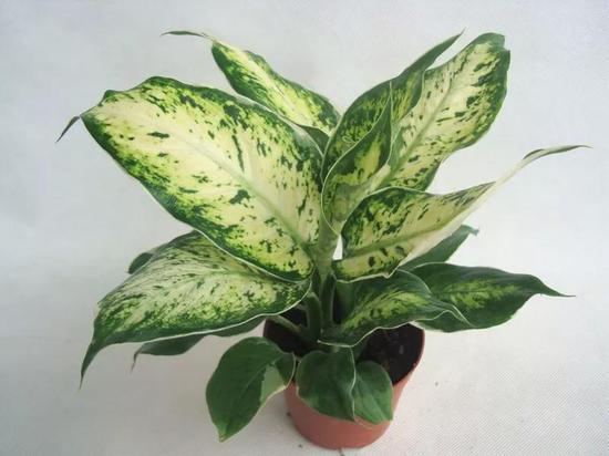 这8种植物放在家里 就等于害了家人健康