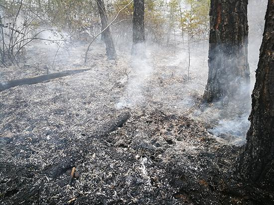 灭火后的林场 张蒙 图