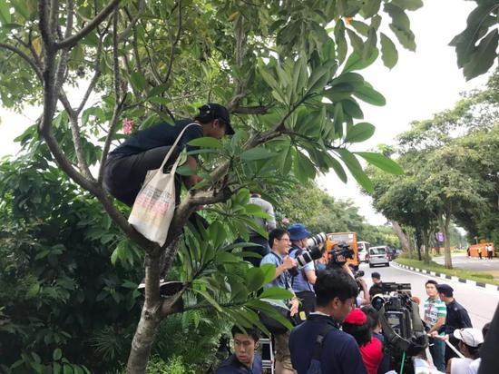▲当地市民爬到树上观看车队进场。新京报记者陶冉发自现场