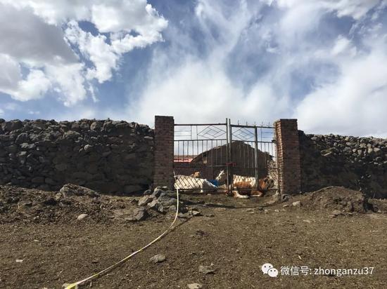 6月4日,卢九林家的牛棚。新京报记者高敏摄