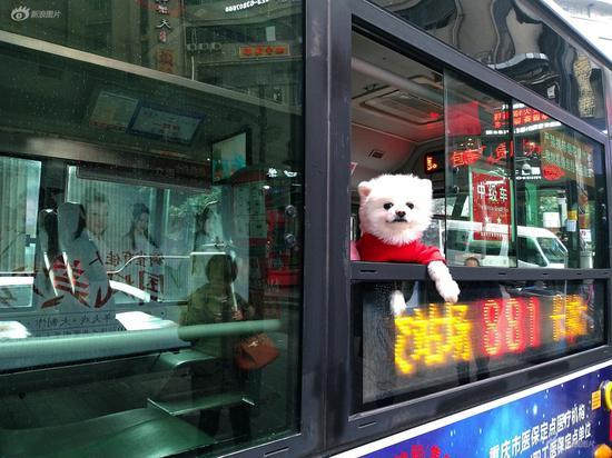 《乘客》摄影:@山南风语 拍摄时间:2019年2月28日 拍摄地点:重庆