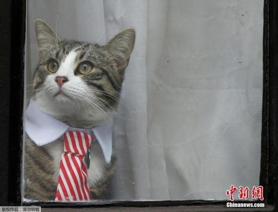 """資料圖:""""維基解密""""網站創始人阿桑奇的寵物貓。"""