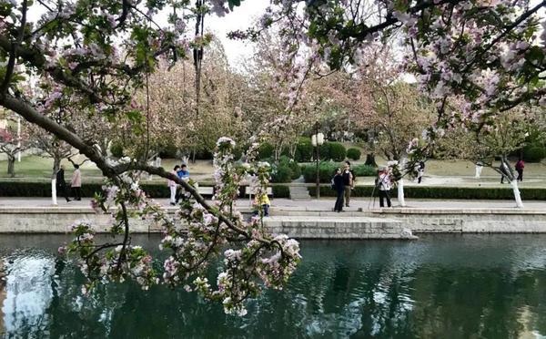 美到震撼 这可能是全北京最好看的海棠花海