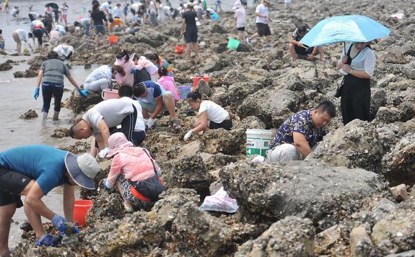 北京山东等地市民扎堆天津海滩狂挖海鲜