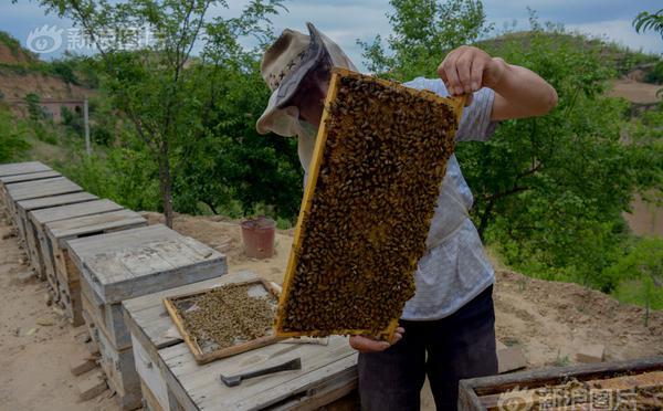 一个都不能少:留守山沟的养蜂人