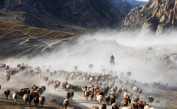 新疆牧民秋季转场 场面震撼
